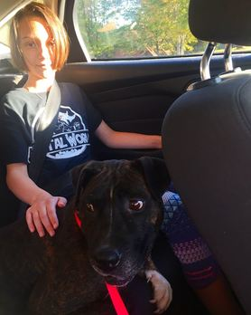 Lily the shelter dog goes home.