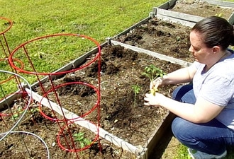 Planting our vegetable garden